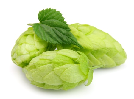 Hop close up on the white  photo