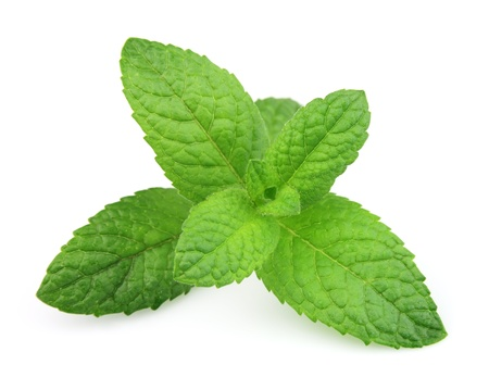 wild mint: Fresh mint close up on white background