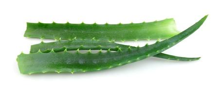 aloe vera flowers: Aloe vera flowers closeup on a white background