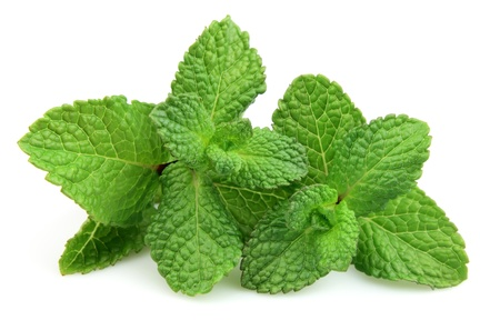 Two branches of fresh mint on a white background photo