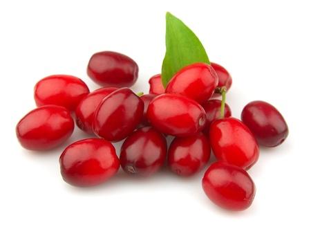 carnelian: cornel berry on a white background