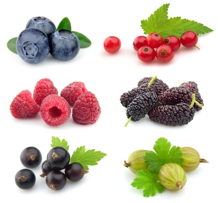 Sweet berries:blueberry,red currant,raspberry,black currant,gooseberry; mulberry photo