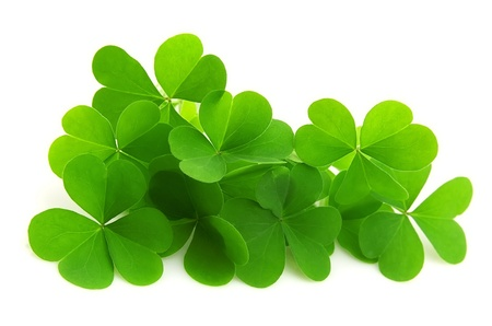 four objects: leaf clover isolated on white