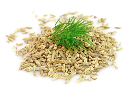Seeds and a fennel branch on a white background