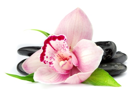 Pink orchid on the black stones on white photo