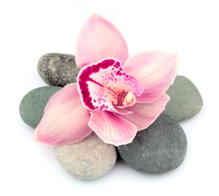 Stones and pink orchid flowers on white  Stock Photo