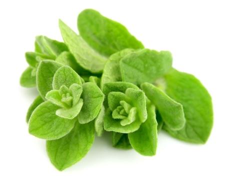 oregano plant: Oregano closeup on white background  Stock Photo