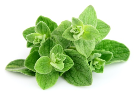 Fresh oregano leafs on white close up Stock Photo