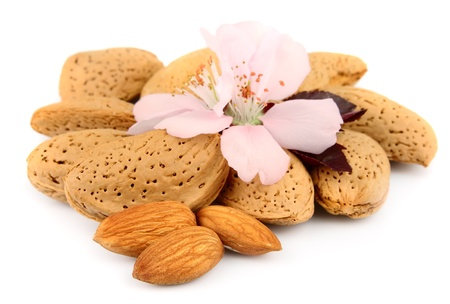 almond tree: Nuts of almonds and almonds flowers
