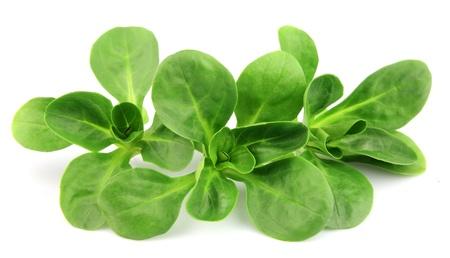 lechuga: Valerianella locusta, ensalada de ma�z, el cordero