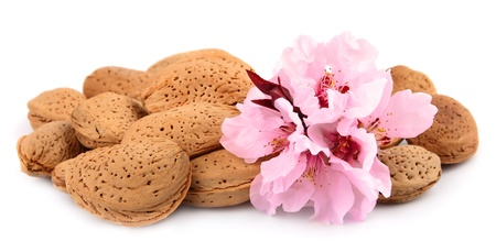 almond tree: Almonds with flowers on white Stock Photo