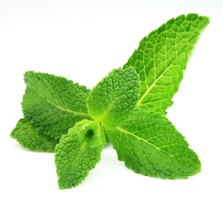 spearmint: Mint leaf close up on a white background