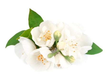 Jasmine flowrs isolated on white background  photo