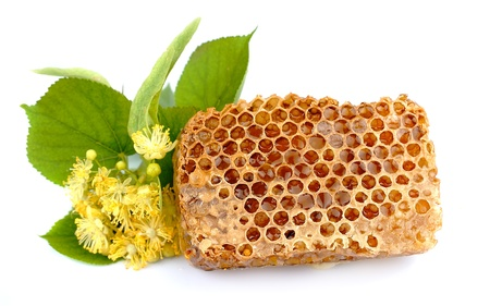 herb medicine: Honey honeycombs and linden branch on a white background  Stock Photo