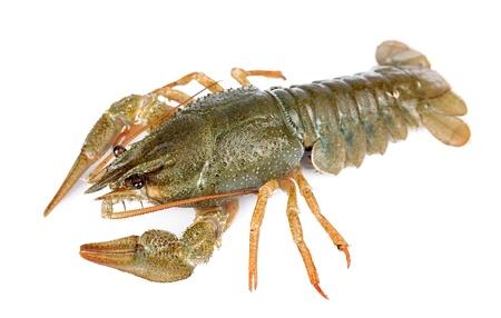 crayfish isolated on white background  Stock Photo