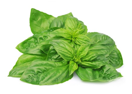 Fresh basil leaves isolated on white background  photo
