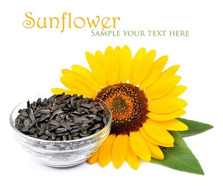 sunflower seeds: Flower sunflower  and seeds  sunflower Stock Photo