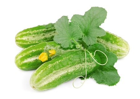 Cucumbers with leaves on white background photo