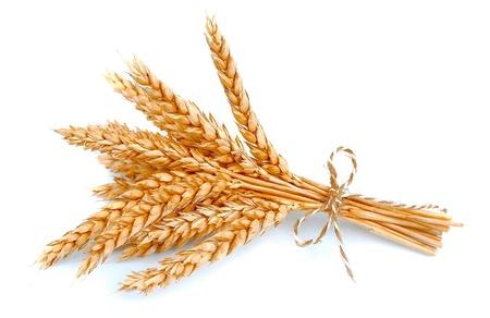 白で隔離される小麦の束 写真素材