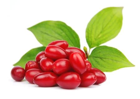 白では甘い dogberry コーネルと葉すぐ近くにあります。