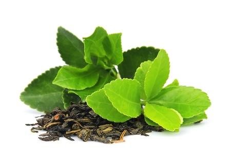Teeblätter auf weißem Hintergrund
