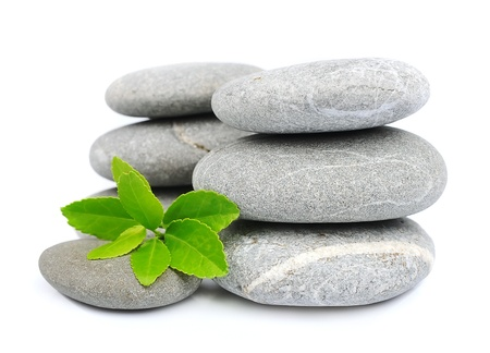 nervure: green leaf and zen stones on white