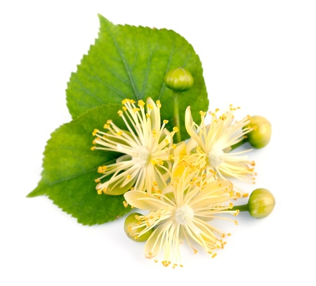 linden tea: linden flowers on a white background  Stock Photo