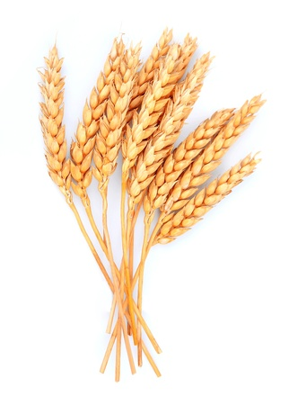 小麦を白い閉じるに分離 写真素材