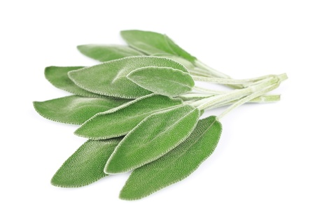 sage: Sage leaves on a white background