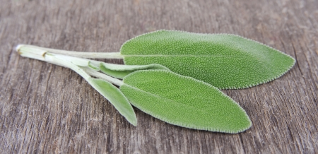 Sage leaves on wooden background Stock Photo - 17011013