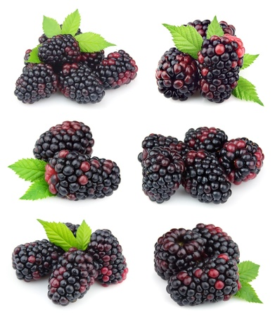 blackberry fruit: Collage of sweet blackberry fruit close up on white