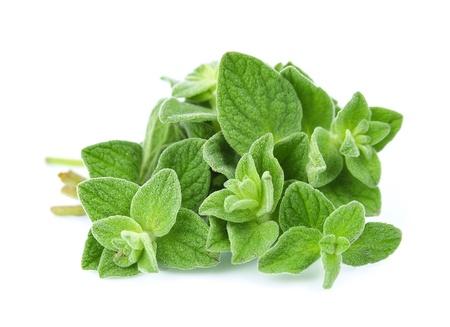 oregano: Oregano closeup on white background  Stock Photo