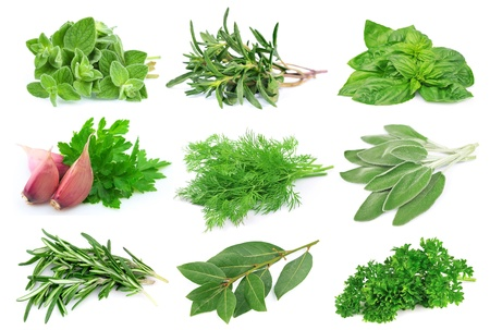 basil leaves: Set from green spice on white background   Stock Photo