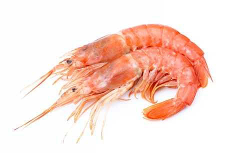 Crevettes sur blanc près de fruits de mer