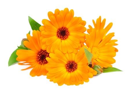 マリーゴールドの花を白で隔離されます。
