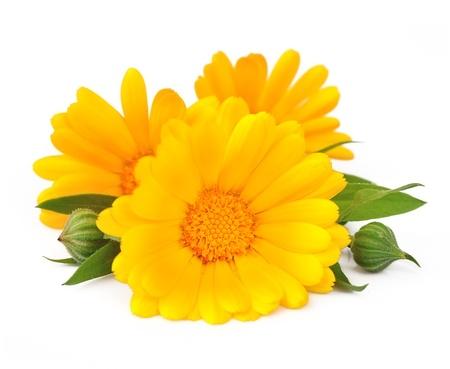 白い背景に分離したマリーゴールド花
