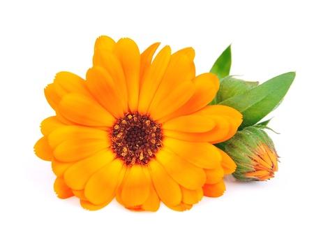 Calendula flowers closeup on white Stock Photo