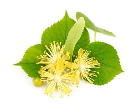 白い背景の上の新鮮なライムの花
