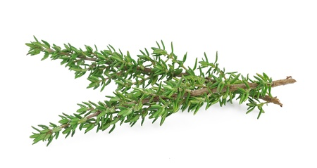 Thyme fresh herb isolated on white background Stock Photo - 17900456