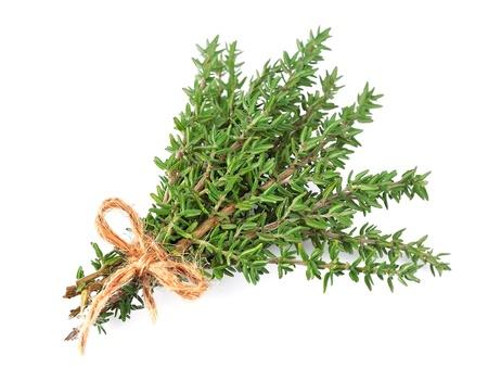 tomillo: hierba de tomillo fresco aislado en el fondo blanco