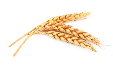 yellow flour: wheat isolated on white close up