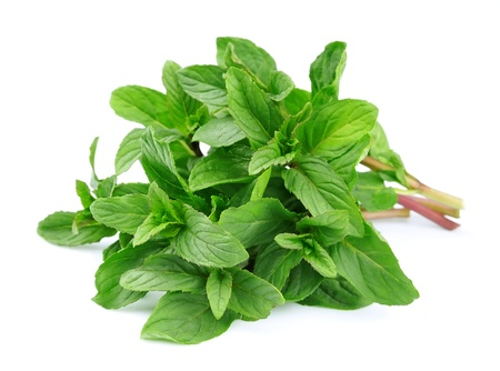 spearmint: Fresh mint close up on white