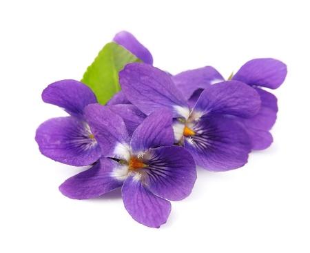 スミレの花をクローズ アップ