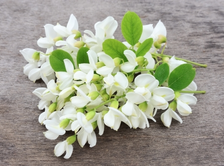 Acacia bloemen met bladeren op wit