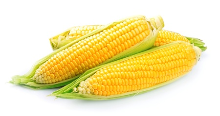 sweetcorn: Corn isolated on a white background