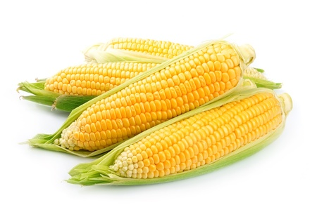 An ear of corn isolated on a white background  Banco de Imagens