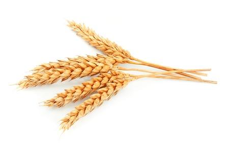 cultivo de trigo: trigo aislado en blanco cerca Foto de archivo