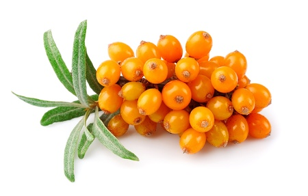 sea food: Sea buckthorn berries branch on a white background