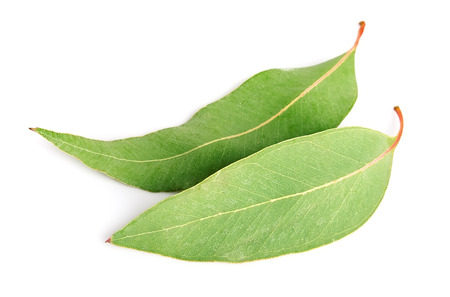 eucalyptus leaves on white close up Banco de Imagens