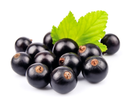 black currants: black currants with leaves on white background